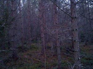 Läskiga skogen
