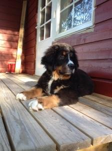 Hugo på verandan