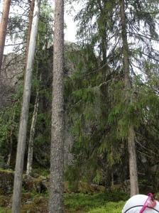 Lostenen i Purmo. Finlands största flyttblock.