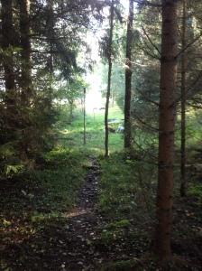Vi promenerade i skogen